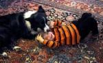 הילד  עם הכלבה - חברות אמתית