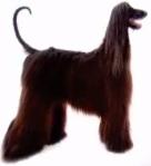 גזעי כלבים אפגני