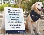 צ'ארלי הכלב שנובח הכי חזק בעולם
