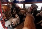 130724 תופעה - חטיפת כלבים במקסיקו