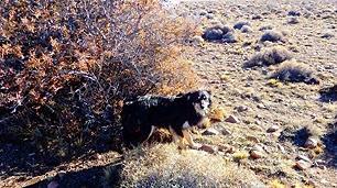 130815 הכלב נשאר ליד גופת בעליו 23 ימים