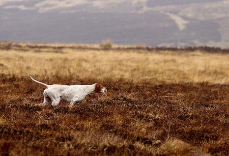 המנצחים בתחרות צילום הכלבים השנתית 02