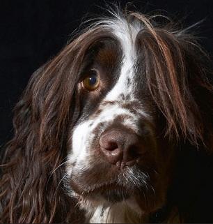 המנצחים בתחרות צילום הכלבים השנתית 05