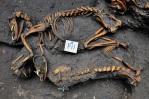 140216 נמצא קבר אחים עתיק של כלבים