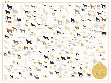 גזעי כלבים 2014