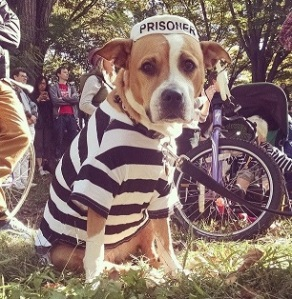 תחפושת לכלב - אסיר