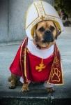 תחפושת לכלב - אפיפיור