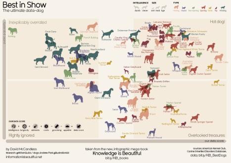 141120 הכלב האפקטיבי ביותר