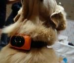 150107 קולר לכלבים גרסת 2015 והפעם עם מצלמה