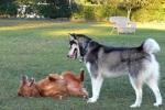 150210 הסיבות שהכלב מתהפך על הגב