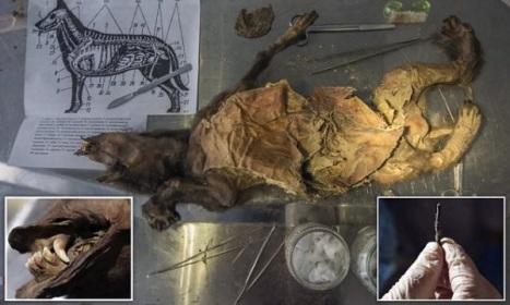 150910 נמצאה כלבה חנוטה בת 12,000 שנים